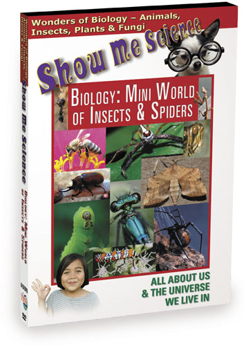 K4501 - Biology Mini World Of Insects & Spiders
